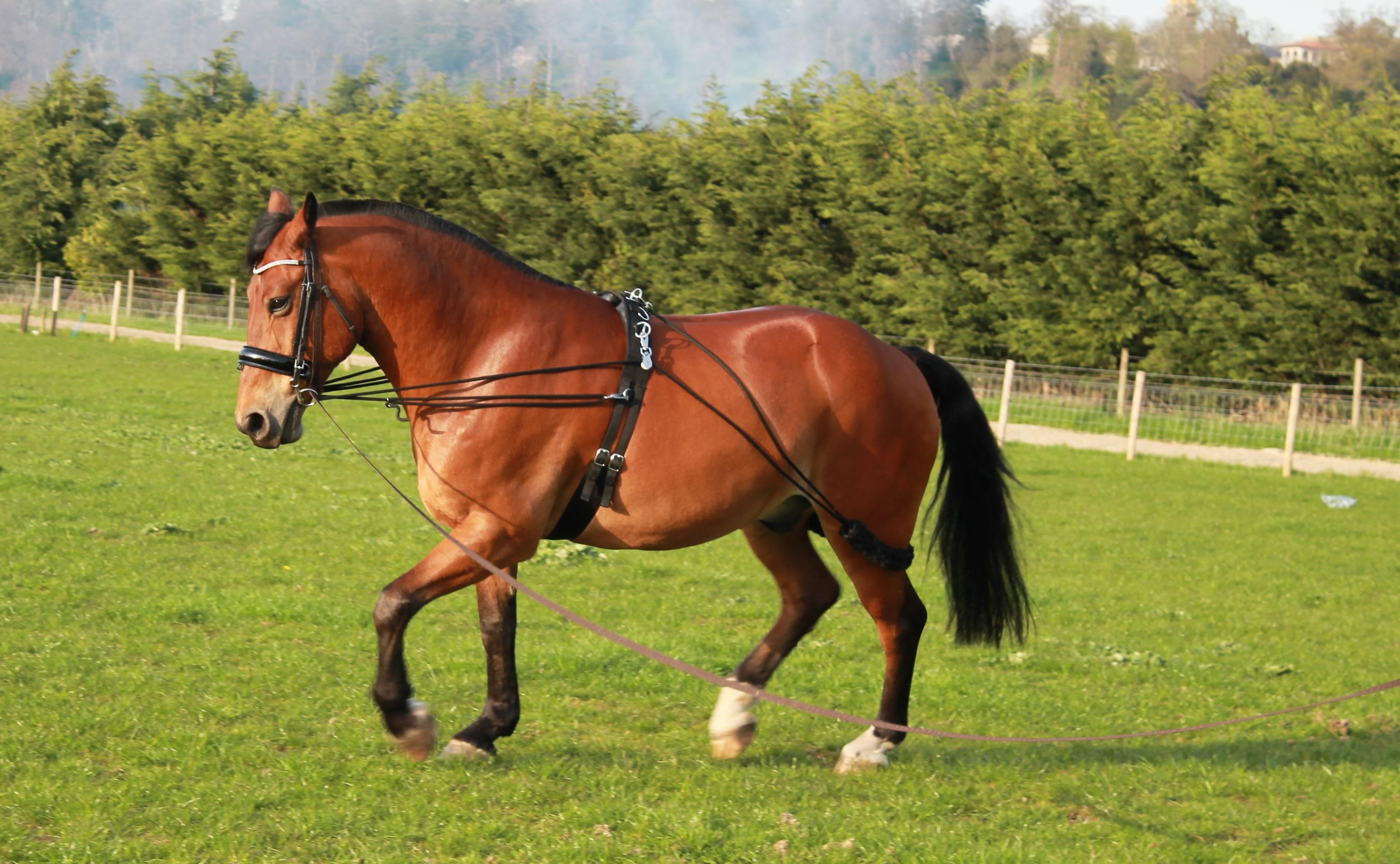 Allure Breakthrough - Parelli Horse Training |Horse Training